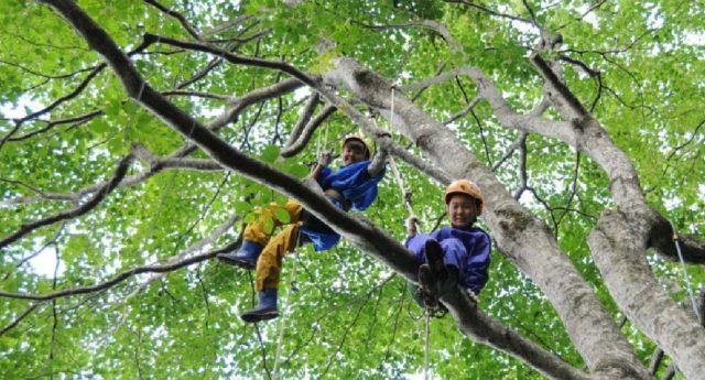 木の世界は楽しいね♪