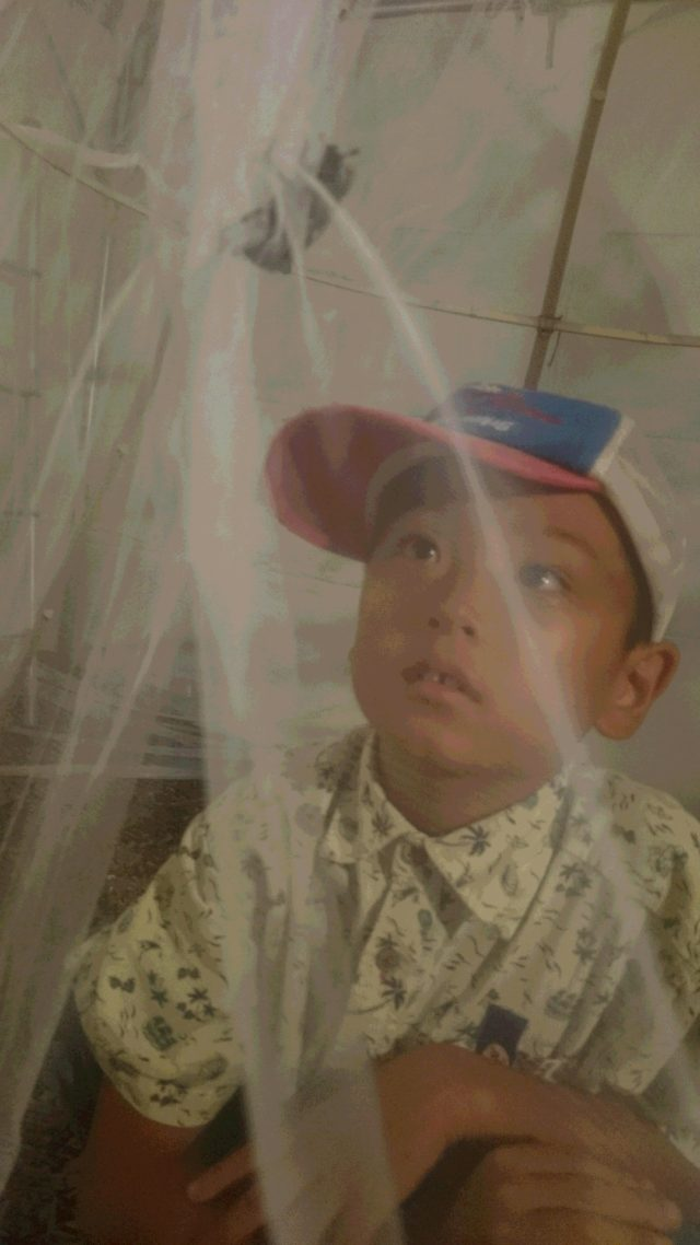 ~かやテントの中に、カブトムシのメスを放ったよ~