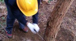 木こり体験