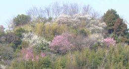 春の花木林2
