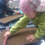 1.まずは、種籾の敷布団となる培養土を、育苗トレー全体に丁寧に広げます。