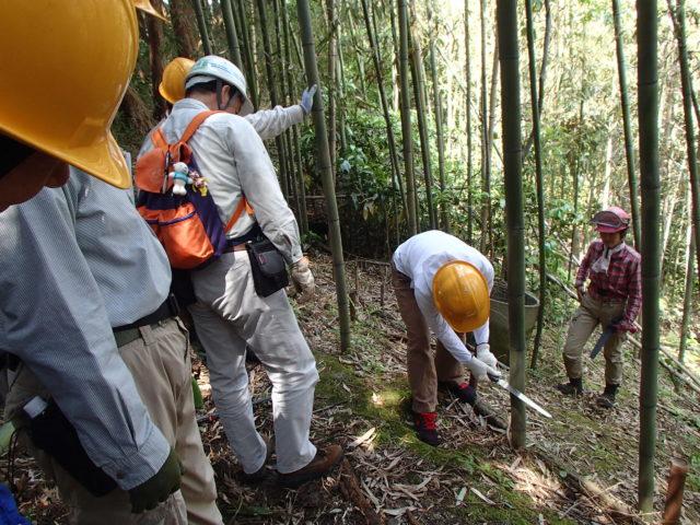 資材の竹を伐りだす