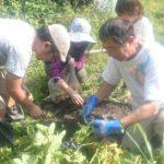 ジャガイモも掘りました