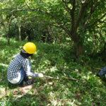 二の丸山で草刈り作業