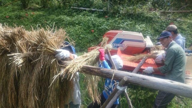 後ろの機械は「ハーベスター」。脱穀専門の機械です。