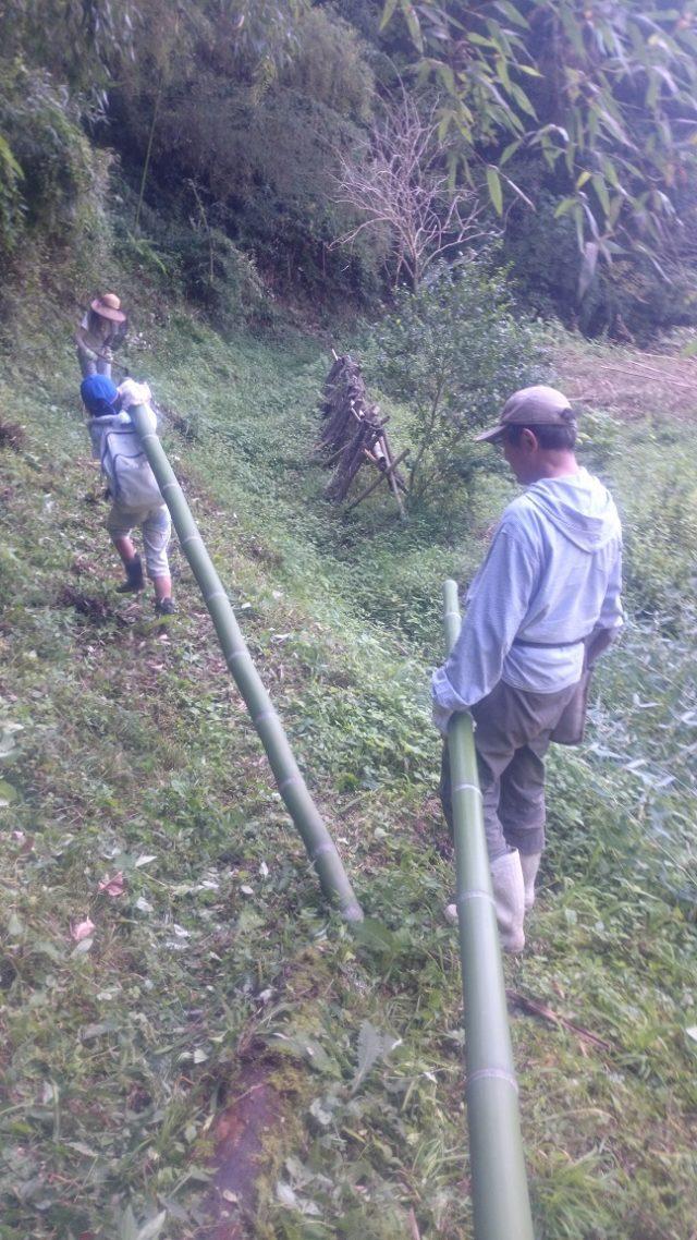 2017.9.30㉑竹の整理