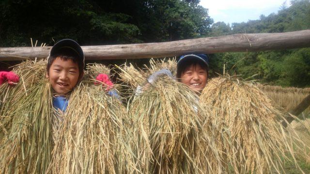 重たい😄♪♪ …3週間の天日干しを終えた、もち米の「脱穀」❕