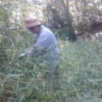 竹の枝葉を片付け中
