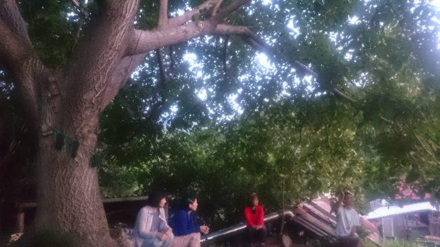 ~大きなクルミの木の下で♪~