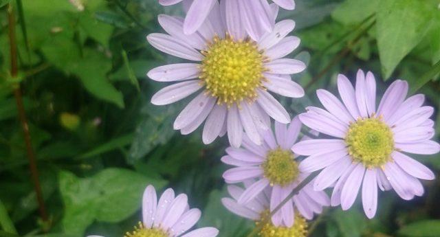 2017.10.14⑩花盛り
