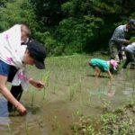 田草取りと苗の捕植