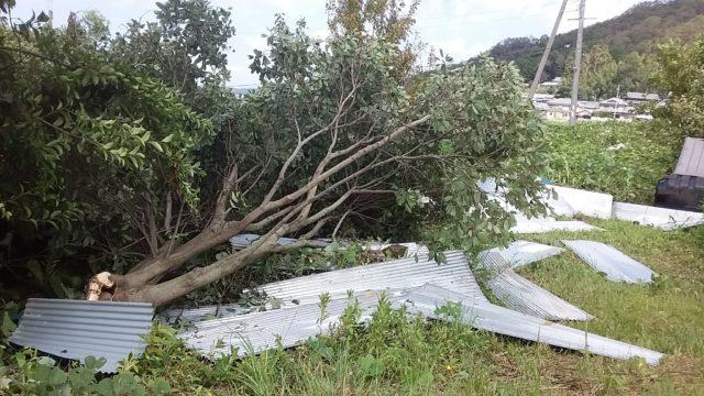 台風21-2