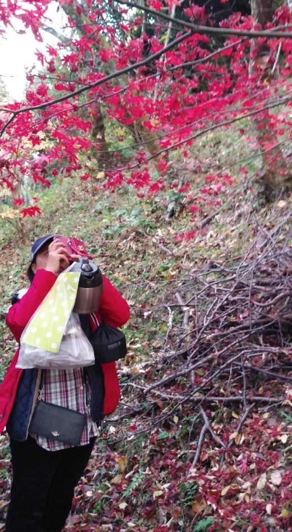 紅葉が見頃を迎えていました