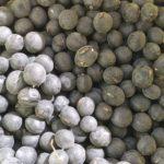 自然農場の無農薬大豆