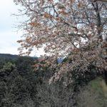 桜190414_24