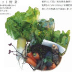 自然農場の野菜