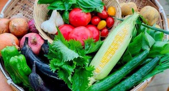0708野菜