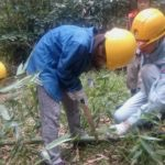 竹伐り体験